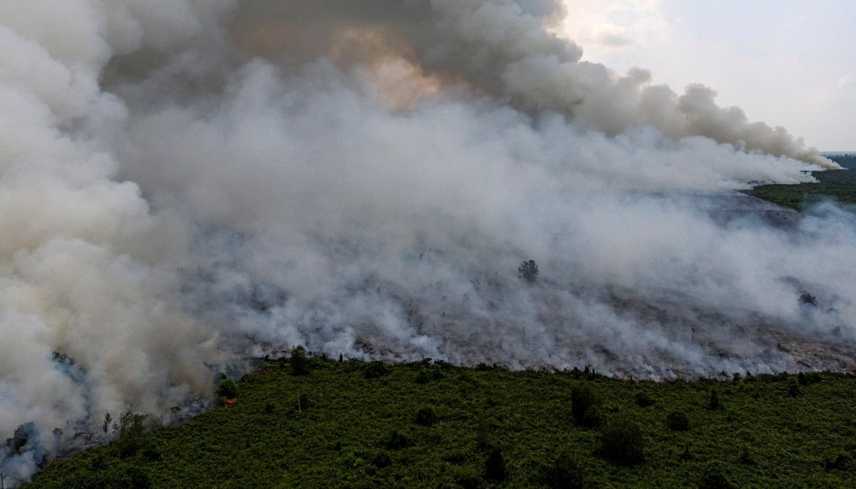 Indonesia forest fires choke Southeast Asia — in pictures m