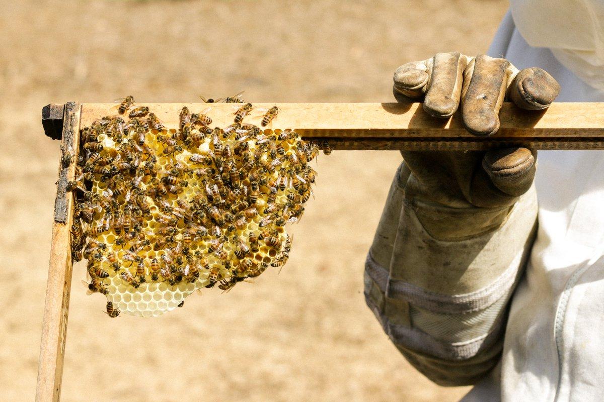 История пчелы в картинках