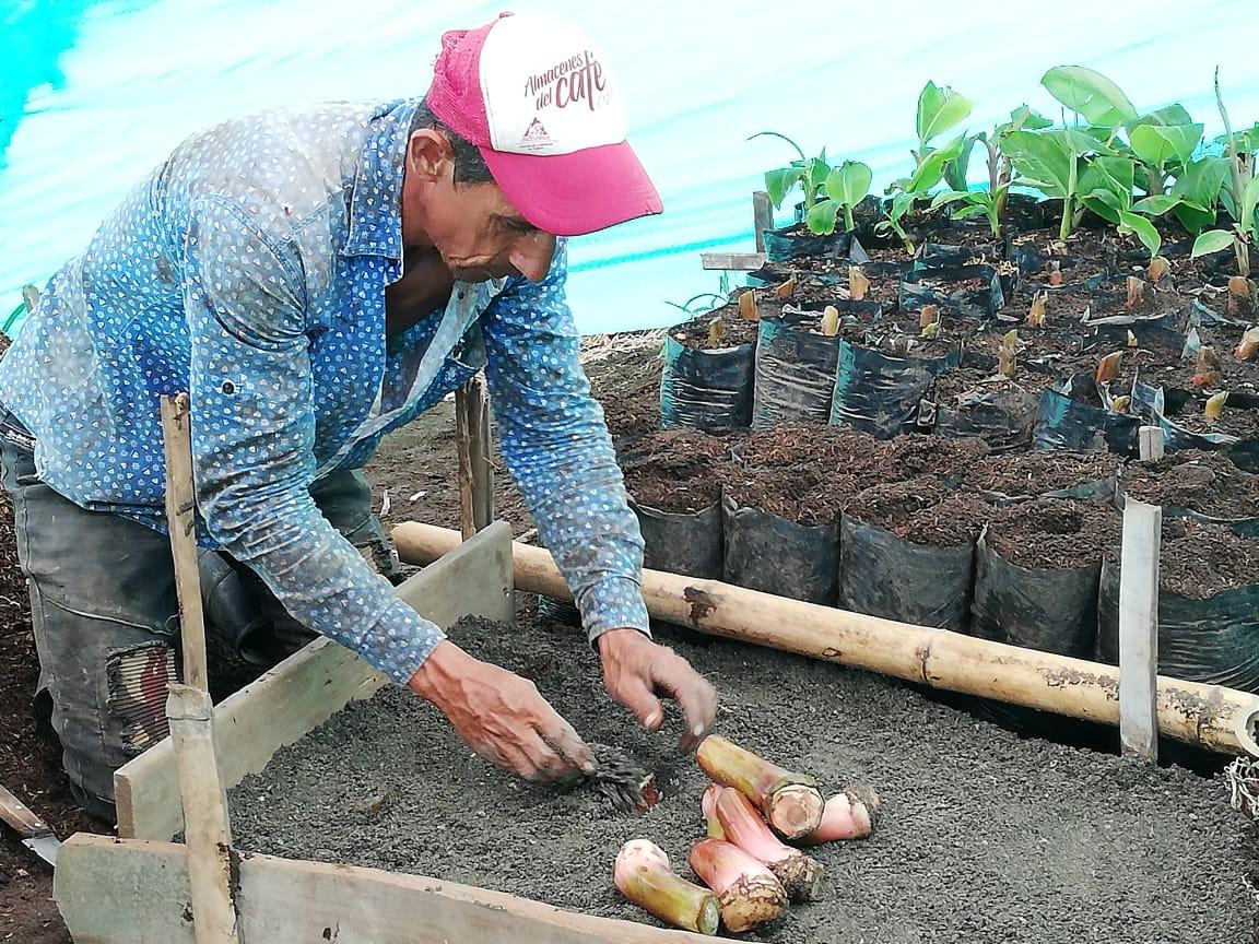 #LoEstamosHaciendo La Extensión Agropecuario Integral hace de nuestros productores ser mas #Productivos y #Competitivos La Unidad de @DlloRuralMzl #NoPara #AgriculturaFamiliar @FAO_Colombia