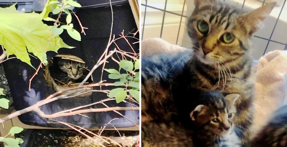 Woman followed a cat to a box on the side of the road and was surprised to find kittens inside. See full story and updates: lovemeow.com/cat-box-kitten…