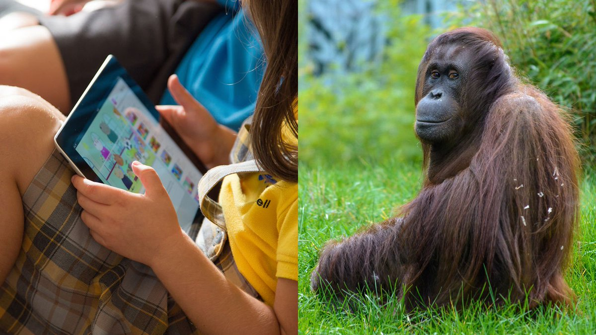 Put Down The iPad And Go Shave An Ape! 6 Awesome Things '90s Kids Grew Up Doing To Orangutans That Kids Today Are Totally Missing Out On http://clckhl.co/O7jCQhv