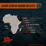 Image for the Tweet beginning: SAVING AFRICAN MARINE WILDLIFE THROUGH