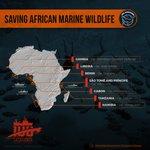 Image for the Tweet beginning: SAVING AFRICAN MARINE WILDLIFE THROUGH