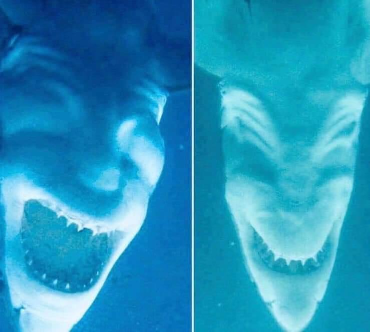 Shark Photos Upside Down Look