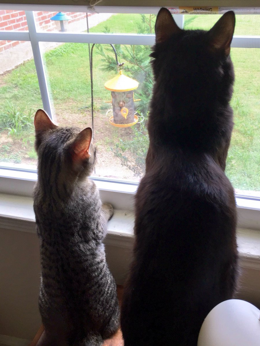 #ThatFirstTimeWe watched birds together, I knew you'd be my best buddy for life. <br>http://pic.twitter.com/by1mMgIGvy