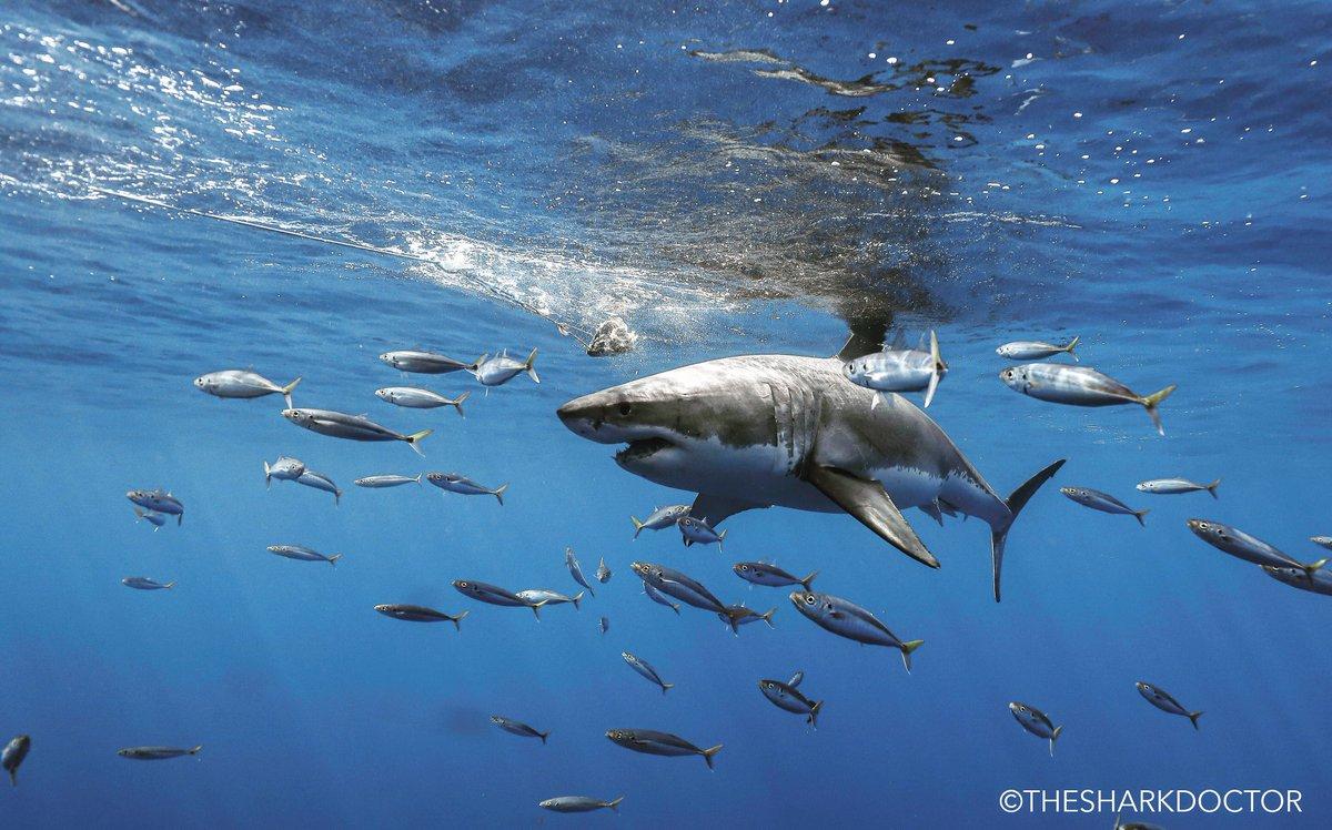 Happy Monday!  #attacklife #horizoncharters #sharkweek #discovery #natgeo #whitesharks pic.twitter.com/vOJBqYIL8G