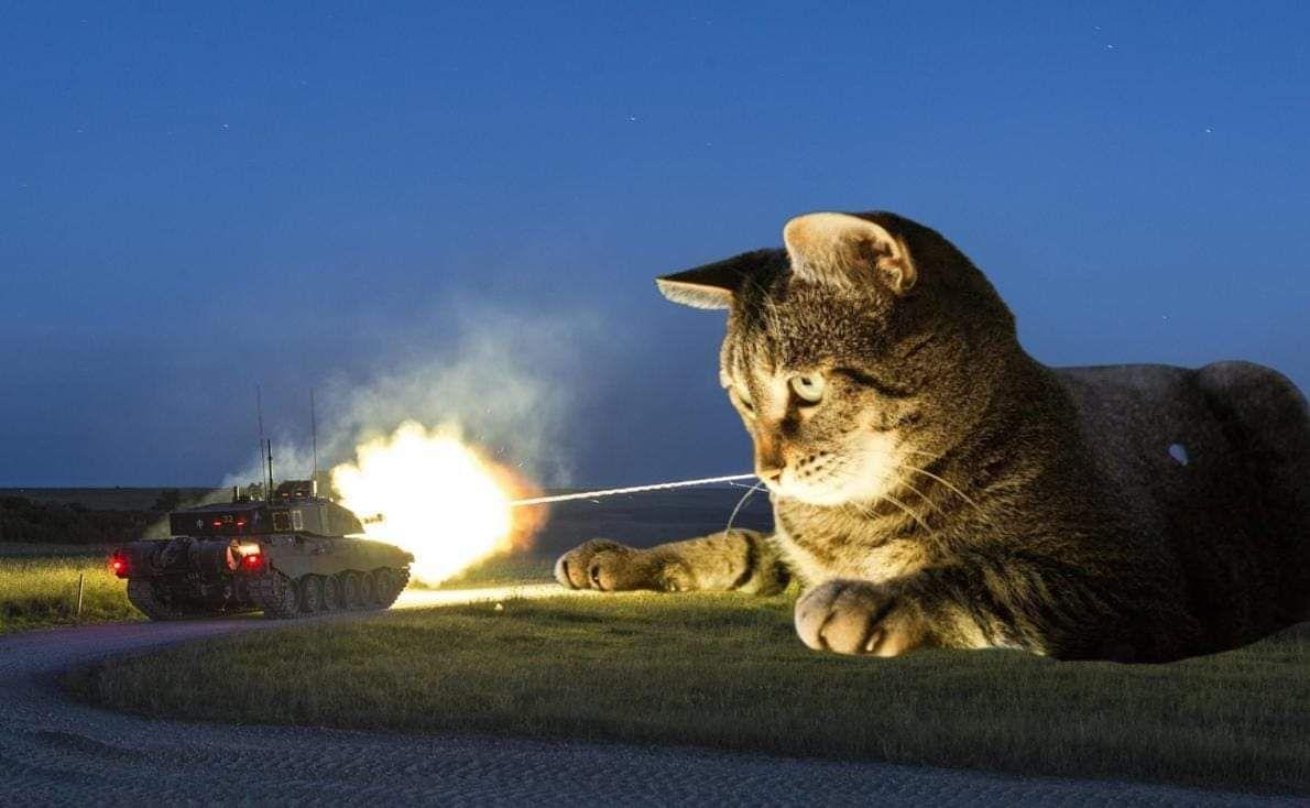 картинки боевых кошек сообщается