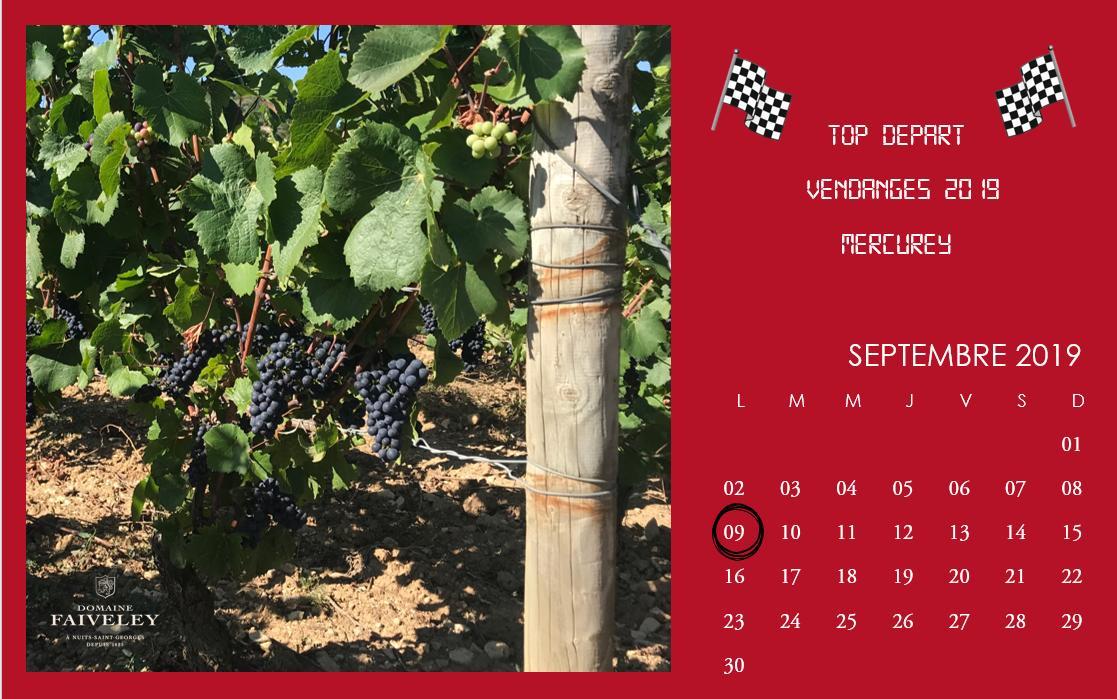 Top départ des vendanges au Domaine. #vendanges2019 #harvest2019 #mercureypic.twitter.com/sDamjDtaU1