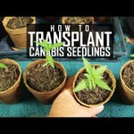 Image for the Tweet beginning: (Seeds, Soil & Sun: How