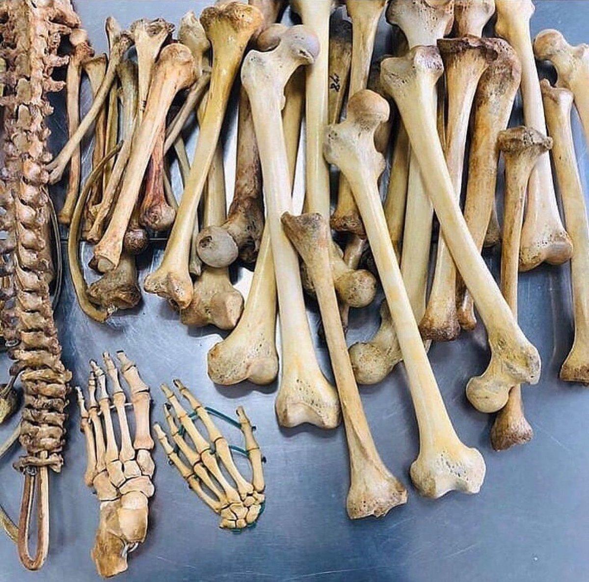 Человеческие кости картинки