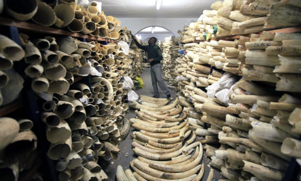 #ICYMI #Wildlife summit votes down plan to allow sale of huge ivory stockpile Some African nations at #CITES conference argue sales would provide much-needed income The rancorous debate exposed deep divisions between African nations...  bit.do/e76ML via @guardian