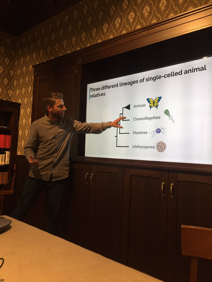 The talk by Jon Bråte(@___JonB___)on #Evolution and the development in single-celled eukaryotes @CASOslo today produced a fruitful discussion #Evolvability