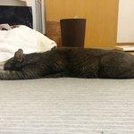 検証してみた!クーラーに当たる飼い猫のポーズには理由があった!