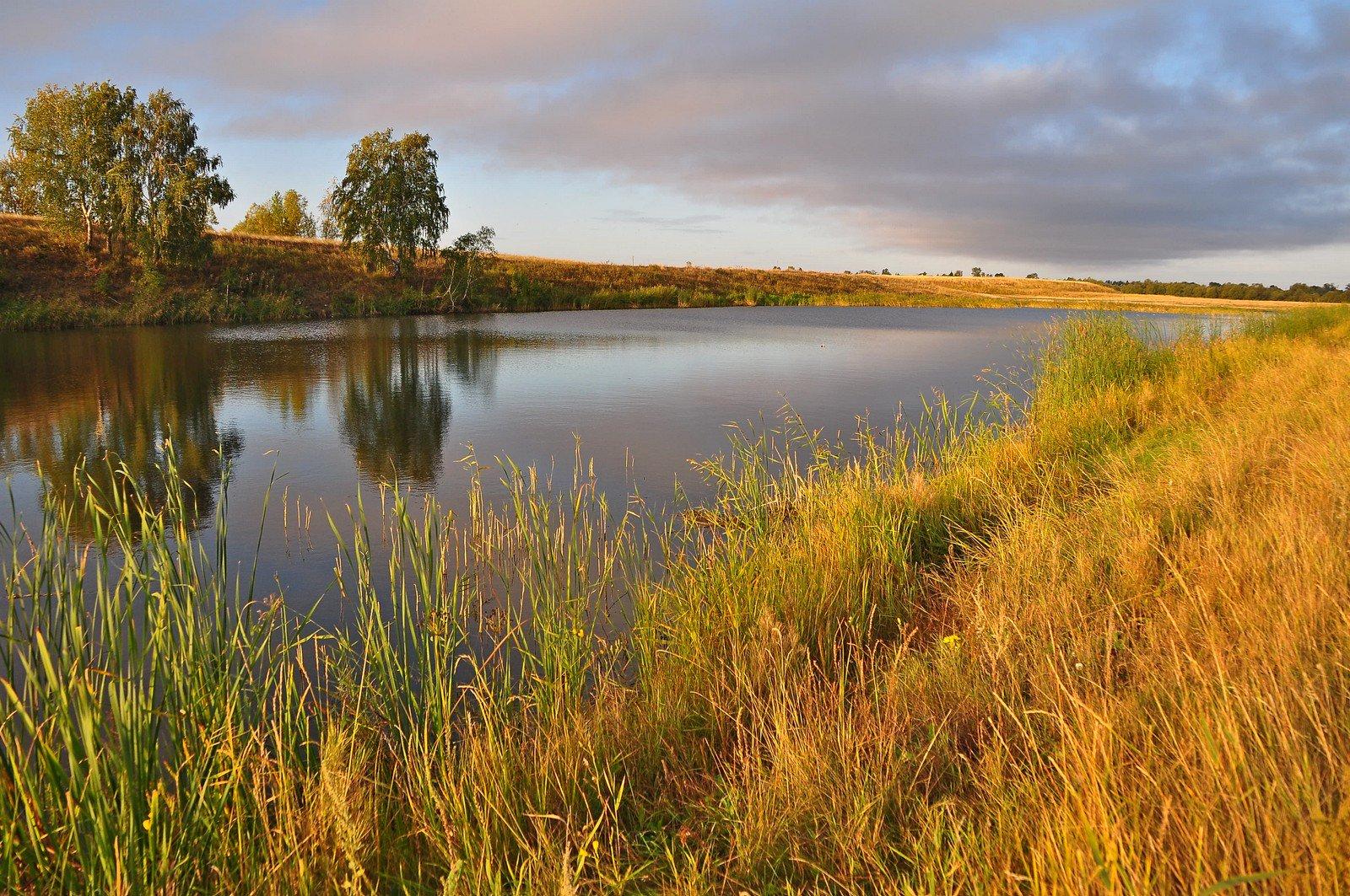 Природные ресурсы земли фото щавель