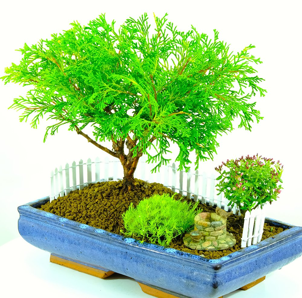Bonsai On Twitter New Penjing Bonsai Gardens Https T Co Spejnhncj8 Penjing Depicting Artistically Formed Trees Other Plants Landscapes And Figurines In Miniature Are Commonly Termed Bonsai Gardens Penjing Bonsaigarden Bonsaisale