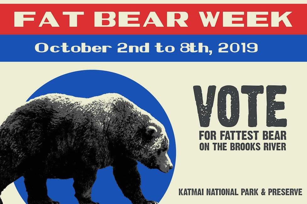 Fat is good. Fat is great...if you are a brown bear.#FATBEARWEEK #FACEBOOK #KATMAI #EXPLORE #BEARS