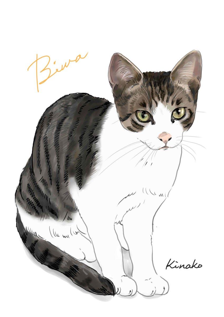 河原の野良猫の子猫3シャシャの子猫のビワ目が大きくてアイラインが入っていて、ドキッとするような美しい子です。イラストで描いてみました。#猫絵 #cat #drawing #猫イラスト #猫画  #野良猫