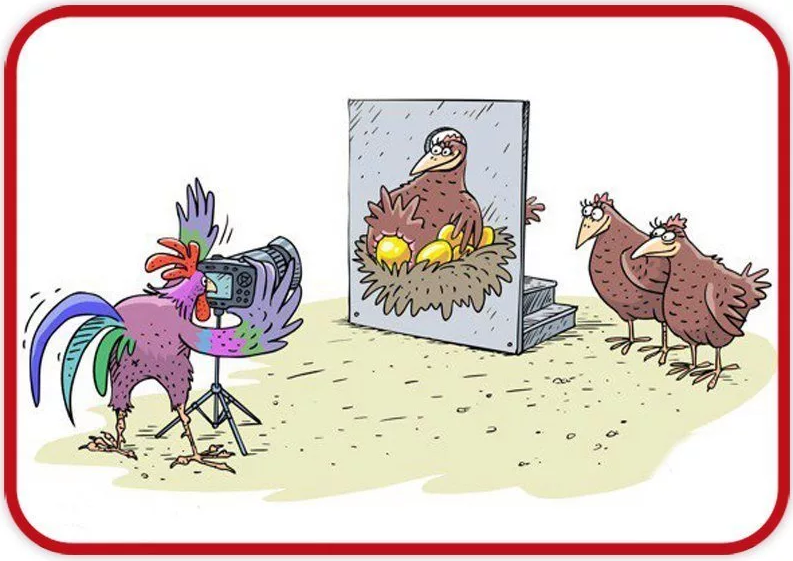 Петух и курица смешные картинки