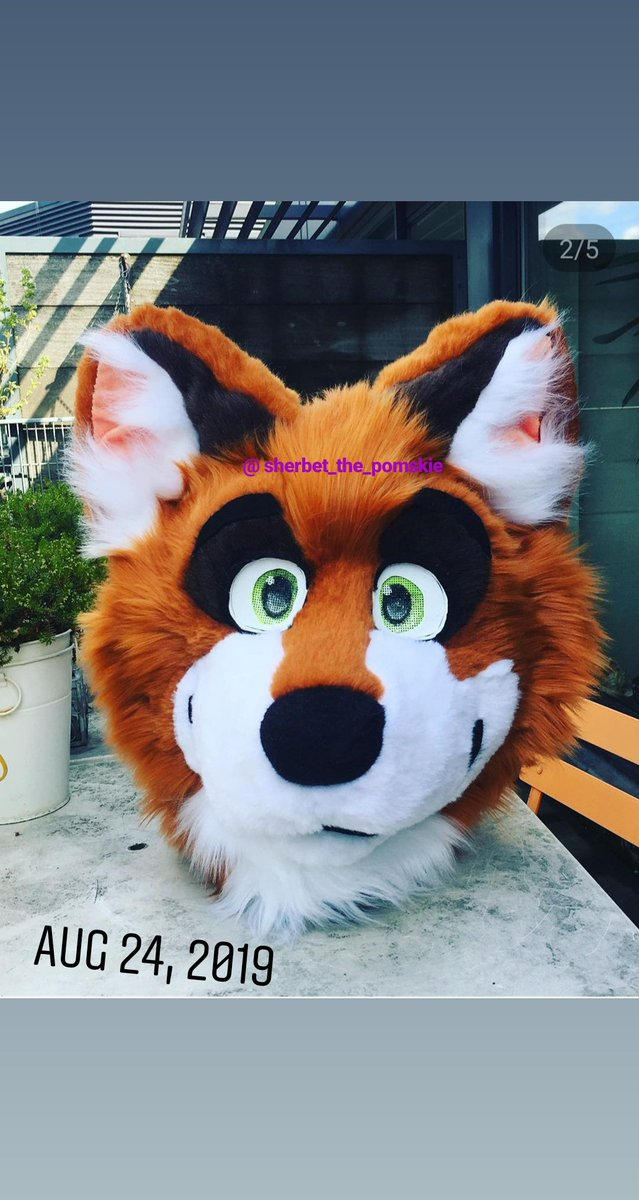 Hey fluff butts! I'm getting a new suit and I'm wondering if you guys want a live stream over on my Instagram or tictok and or a YouTuber video of the unboxing? . . . #furryconvention #furrys #furry #furrie #furryart #furryanthro #fursuiting #fursuit #furries #furrycomunity<br>http://pic.twitter.com/PZd3bXTGoM