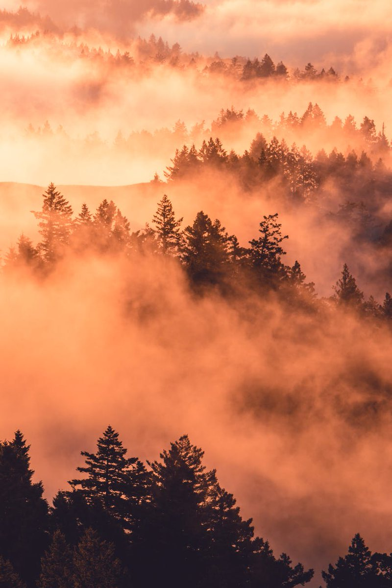 Say goodbye to summer As Autumn rolls in like smoke From a dream Coloring the trees Cooling the night Painting the fields With pumpkins and apples  #vss365 #1linewed #TalesNoir<br>http://pic.twitter.com/wgaXypEUYe