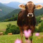 """Image for the Tweet beginning: """"Tierschutz in der Nutztierhaltung"""" steht"""