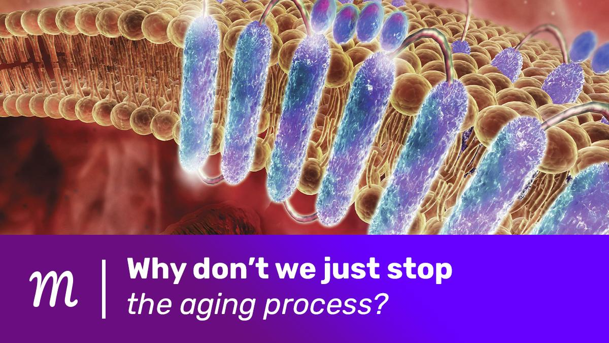 New story in our #healthyaging #moonshot Why don't we just stop the aging process? Interesting ideas worth checking out by @StuartMaudsley @UAntwerpen @VIBLifeSciences Now on #moonshot4life https://t.co/qSL1QsGini #aging https://t.co/Gr0fgeXLSk