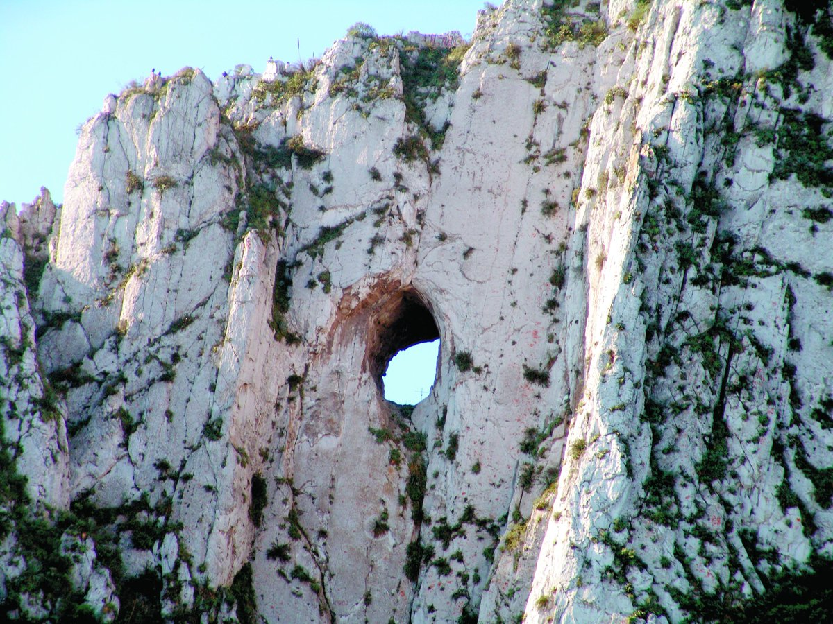 vista externa del nido de los aguiluchos