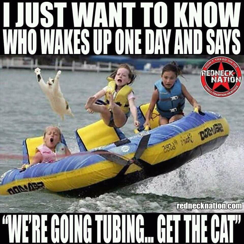 #FunniestTweets 😂😂😂😂 Cat says 'Fk this'