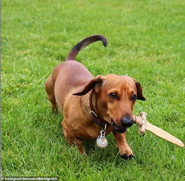 #ToSurviveInTheWild you need a dog with a knife.