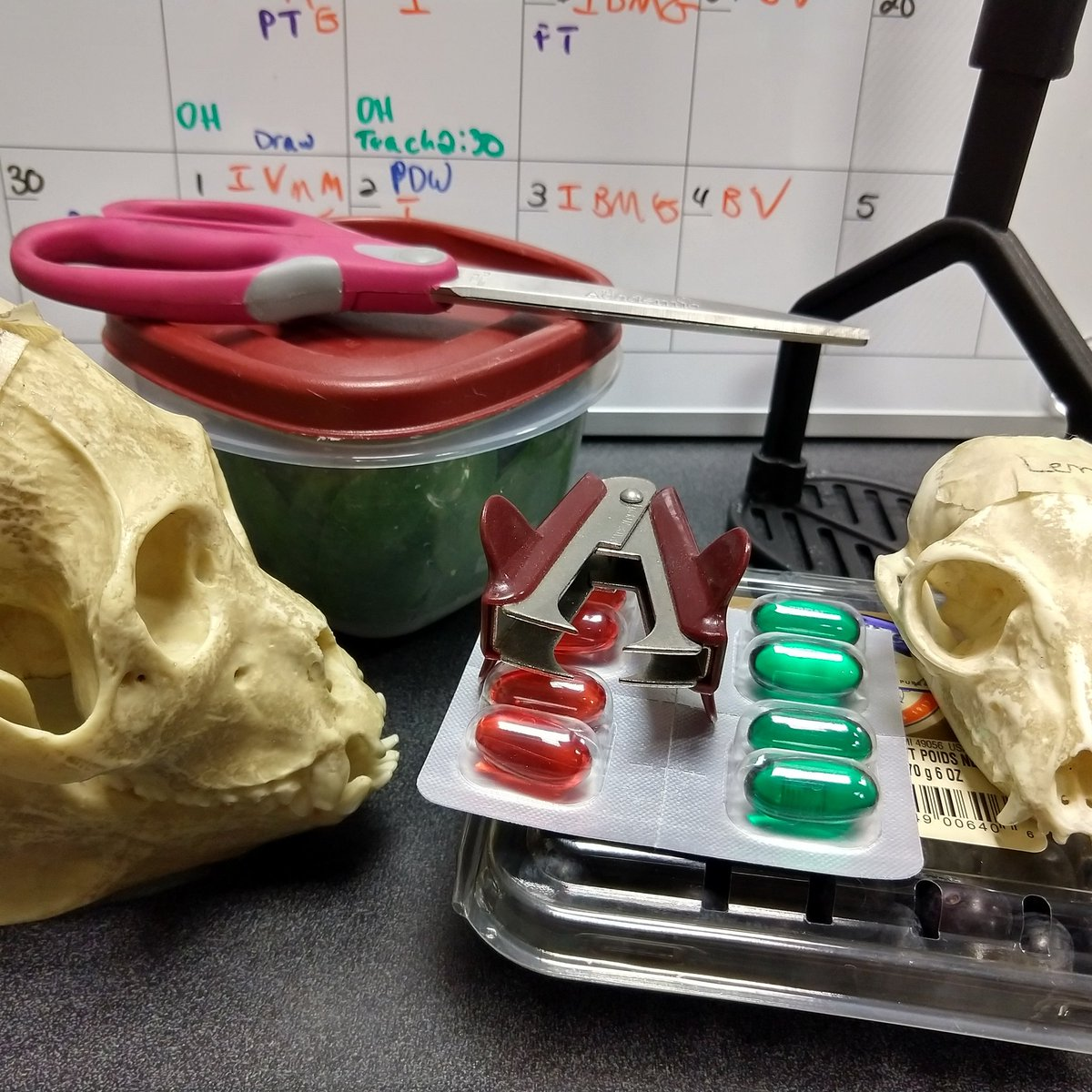 Tooth morphology and dietary specializations in Evolution of the Human Diet today!