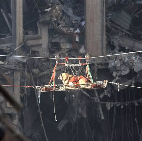 We remember the #RescueDogs at #911Anniversary. The dogs became so depressed at not finding live survivors as they were trained to, the firefighters would hide in the rubble to give them success & cheer them up. Beautiful firefighters. #GroundZero #tailsofjoy
