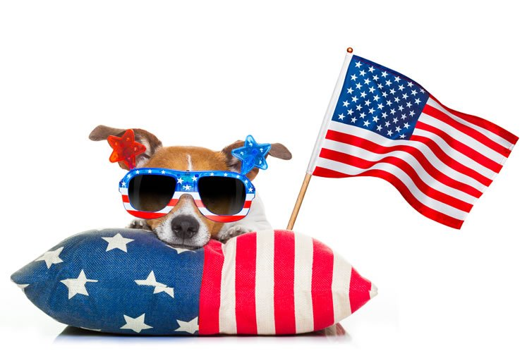 All American Pet Photo Day All American Pet Photo Day is an annual holiday celebrated on July 11th.Hashtags:#AllAmericanPetPhotoDay#PetPhotoDay#PetPhoto http://rviv.ly/QAadPy  #nationalday