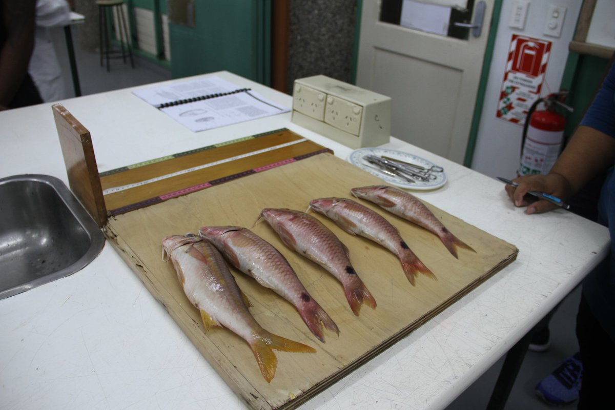 Usp School Of Marine Studies On Twitter Our Fish Fisheries Biology Ms307 Class Will Be Ageing Fish For The Next 2 Weeks First Step Is To Extract Scales Otoliths Ear Bones
