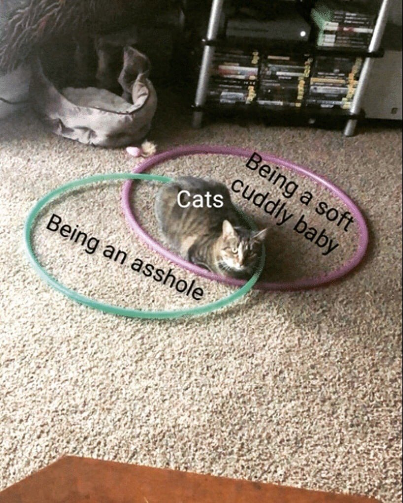 Probably the most successful Venn diagram I've ever seen.   #cats #WednesdayWisdom <br>http://pic.twitter.com/aJeVb9xjyA
