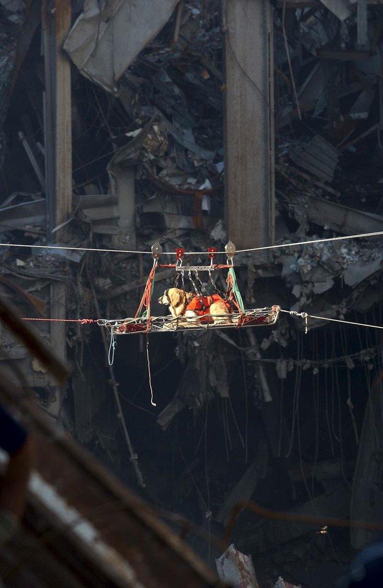 Muchos Lomitos participaron en las labores de rescate en la tragedia de la Torres Gemelas 🐶Gracias por siempre dar todo, sin esperar mas que una caricia o un abrazo a cambio 🙏🏽#911Anniversary #NeverForget