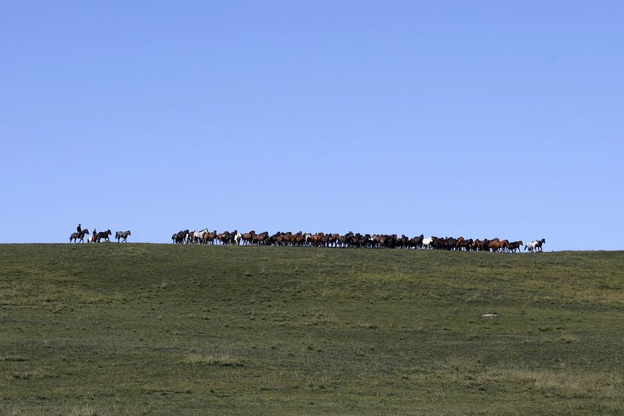 Beautiful scenery of thousand-year-old Shandan horse ranch in NW China's Gansu  http://xhne.ws/aGQpc
