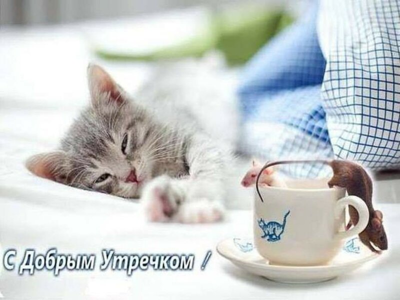 Картинки с добрым утром с котом