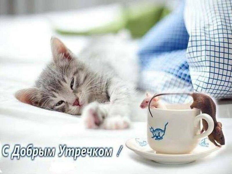 Прикольную, картинки с кошками доброе утро смешные