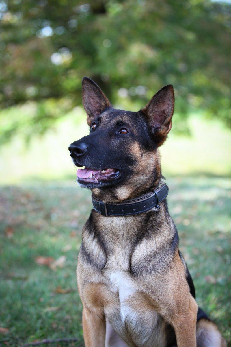 Azor The Dog