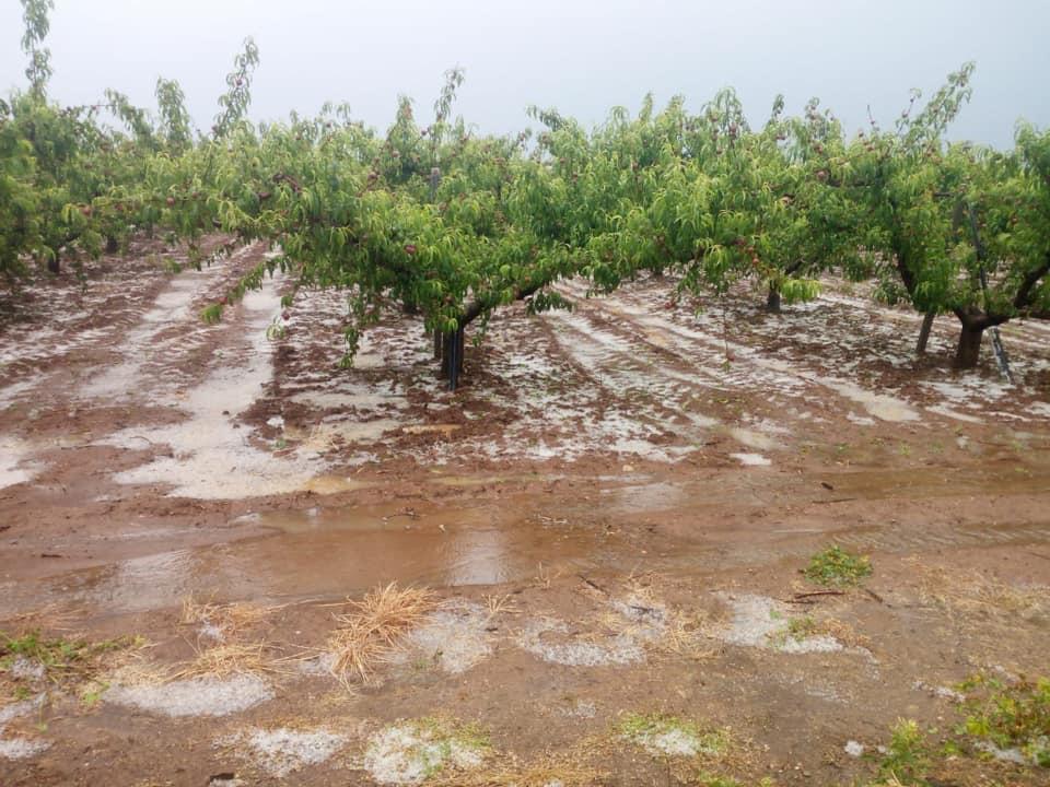 I cambiamenti climatici influiranno sull'agricoltu...