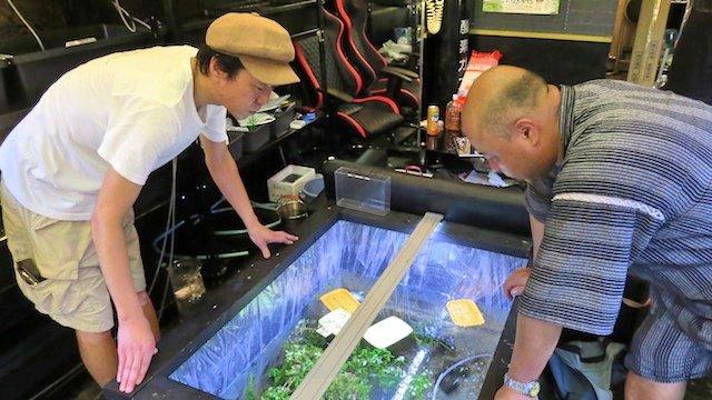 約40種類のメダカを完璧なケアの元で飼育している「東京めだか流通センター」へ行ってきた。メダカ愛好家は想像以上に多いようで、専門書も出版されている。改良メダカは500種類を超えているそう。[「東京めだか流通センター」で奥深い改良メダカの世界に触れた] 石原たきび