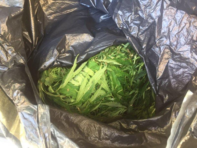 Задержали автомобиль с марихуаной что может быть за выращивание конопли в россии