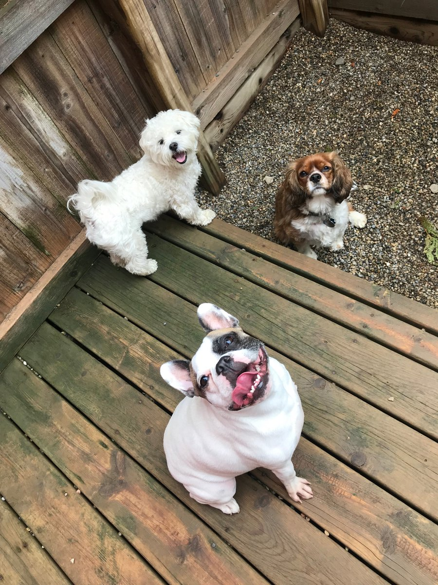 Wyatt, Tucker, and Oberon pose for a group photo