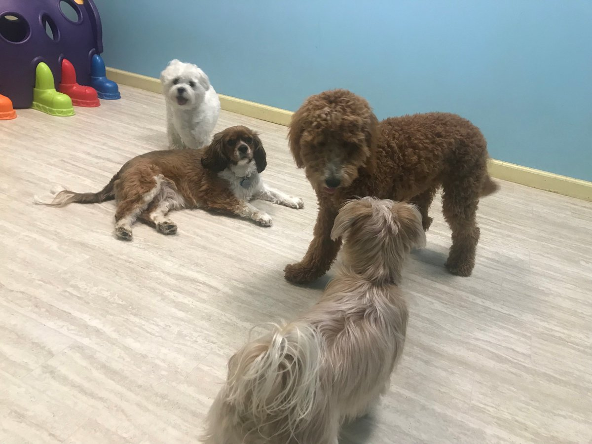 Tucker, Wyatt, Fiona, and Tiger Lily hang out