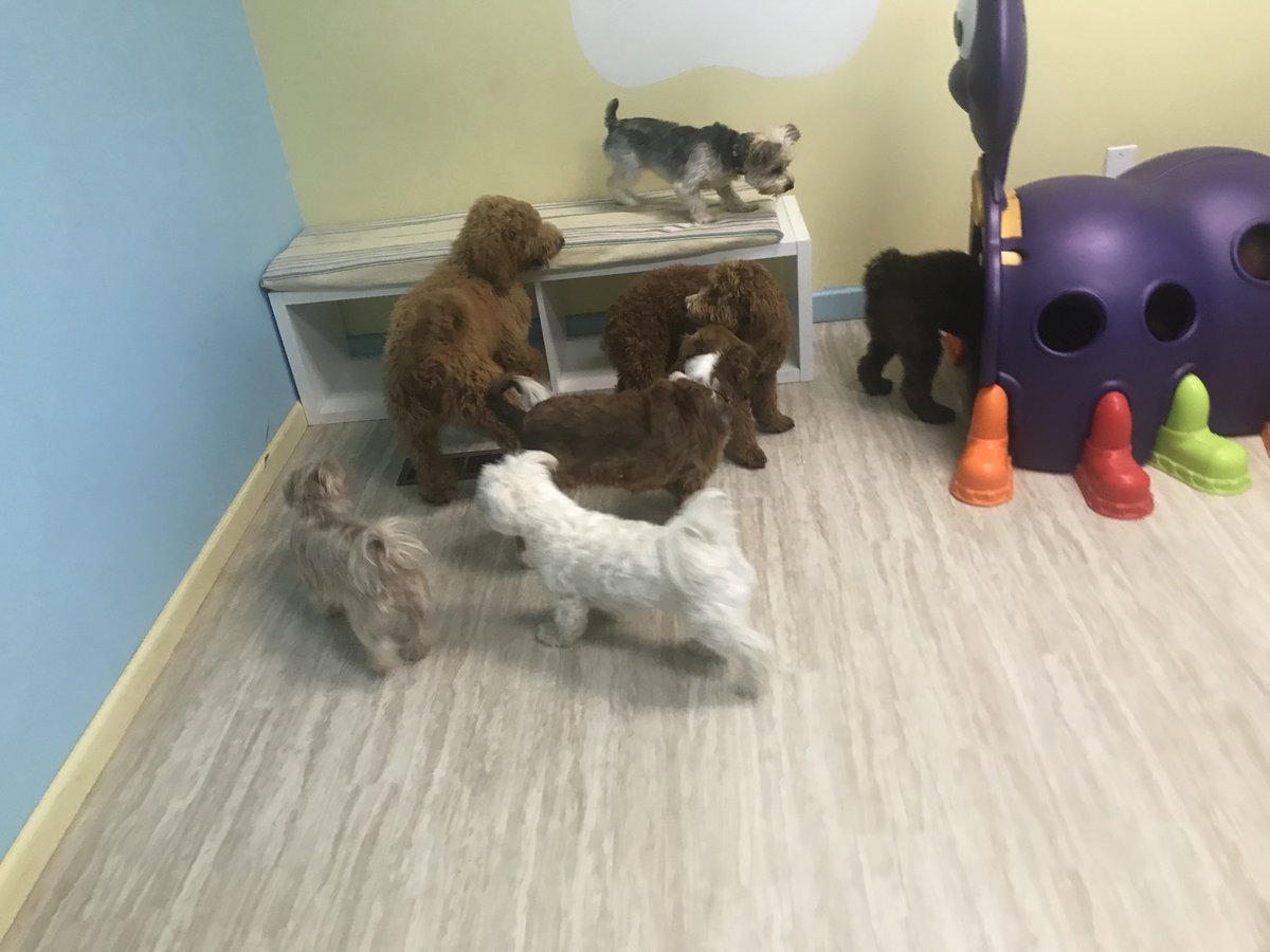 Violet, Kofi, Fiona, Shadow, Wyatt, Tigerlily, and Tucker have a doggy party!