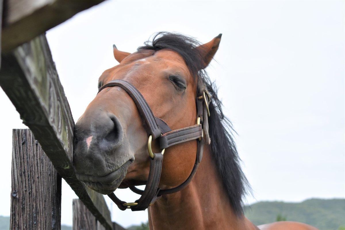 牧柵にお鼻を付けてウトウトしているのが可愛い、ヘンリーバローズ♡