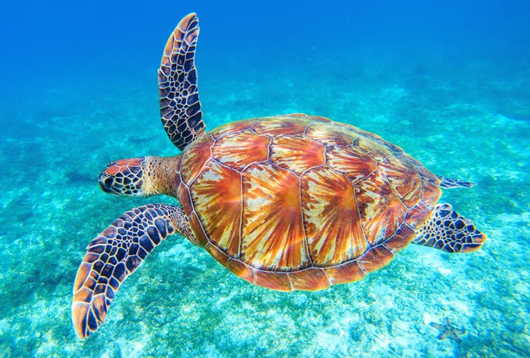 World Turtle Day World Turtle Day is an annual holiday celebrated on May 23rd.  Hashtags: #WorldTurtleDay #TurtleDay #Turtles  http:// rviv.ly/VZbHAa     #nationalday<br>http://pic.twitter.com/WDoYuzFsMx