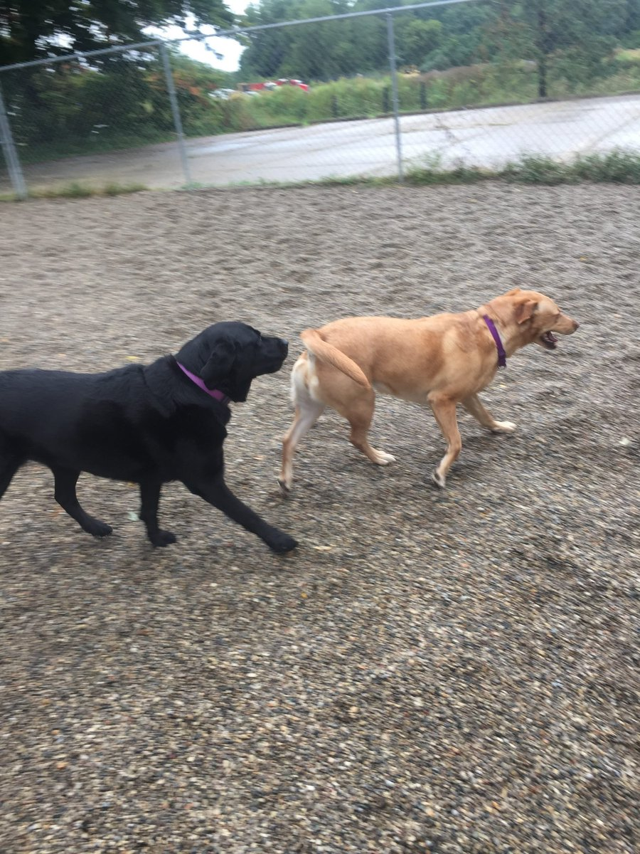 Greta and Clary play follow the leader!