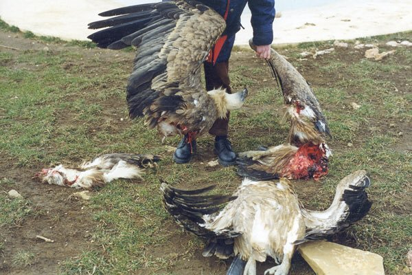 #greennewdeal wind turbines shittt will get rid of all bats birds eagles <br>http://pic.twitter.com/Dv2iV5eLr2