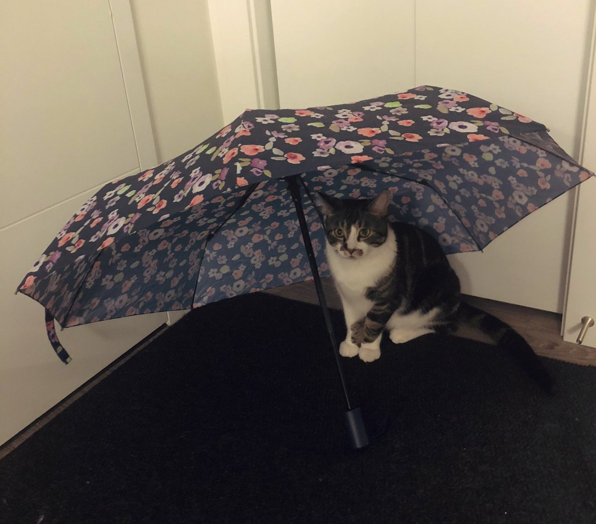 Jasper is ready for the rain.
